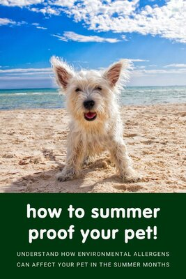 Environmental allergies; Prepare your pet for summer!