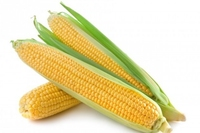 Fresh Corn Cobb