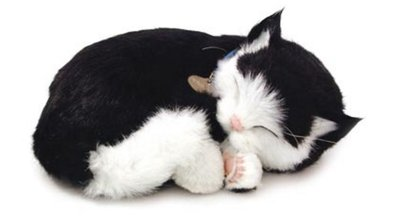 Breathing Soft Black and white Cat