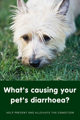 What's causing your pet's diarrhoea?