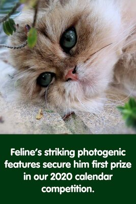 Gorgeous Gustaf Wins Top Prize