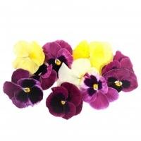 Micro Pansey Flower
