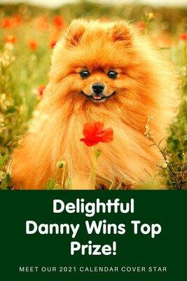 Delightful Danny Wins Top Prize