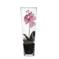 Phalaenopsis Pink in Vase