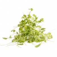 Micro Parsley 30gm