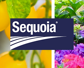 Sequoia - A New Fast Acting Insecticide