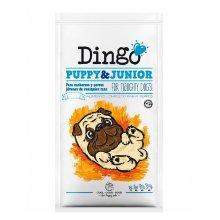 2x1 Dingo Puppy &amp&#x3B; Junior cachorros y perros jóvene