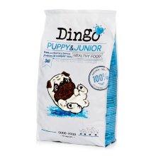Dingo Puppy & Junior cachorros y perros jóvenes