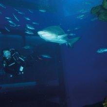 Bucea con Tiburones