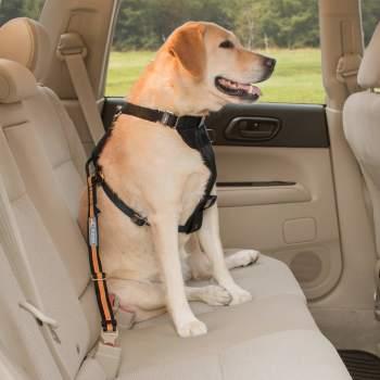 Cinturón de seguridad de coche para perros