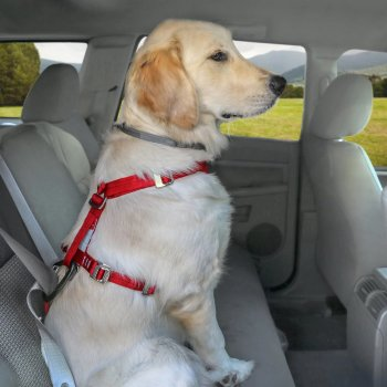 KURGO Arnés Tru-Fit Para Perros