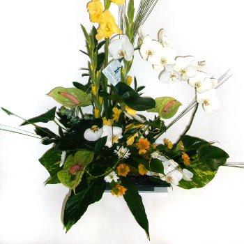 Centro con Orquídea