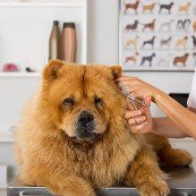 Lavado + Corte para Perro grande de 20 a 35kg