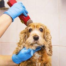 Lavado + Corte para Perro pequeño de 3 a 10kg