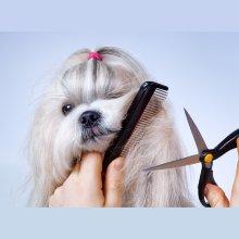 Peluquería canina Corte a Tijera para tu perro