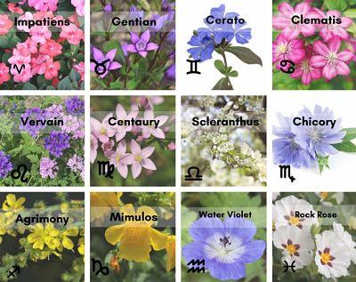 Signos zodiacales y flores de bach