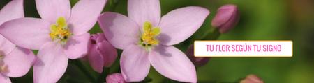 tu flor según tu signo zodiacal
