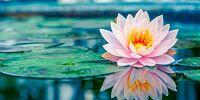 terapia floral y astrologia