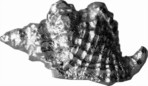 Cast pewter Triton Shell ornament
