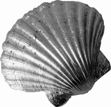 Cast Pewter Scallop Shell Ornament