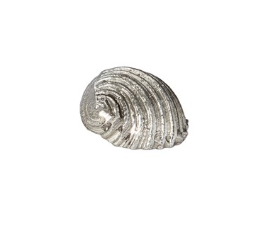 cast pewter Flat Spiral Shell ornament
