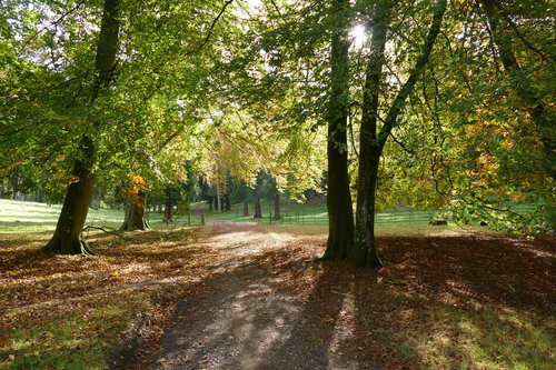 Path to the West Dean Arboretum in autumn. Image credit Jeff Potter