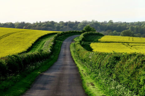 Small Road Rising Through Fields Of Yellow Flowers