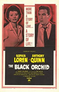 The Black Orchid Cover