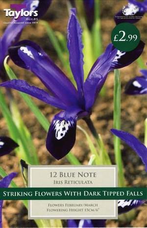 IRIS DWARF BLUE NOTE