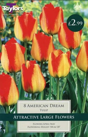 TULIP AMERICAN DREAM