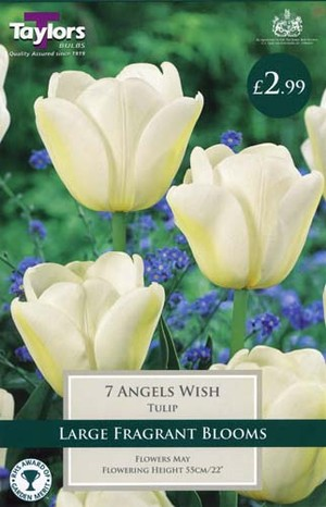 TULIP ANGELS WISH