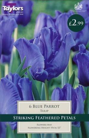 TULIP BLUE PARROT