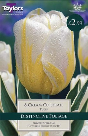 TULIP CREAM COCKTAIL