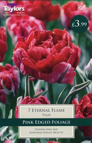 TULIP ETERNAL FLAME