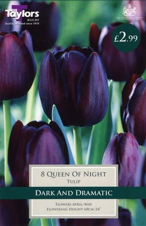 TULIP QUEEN OF NIGHT