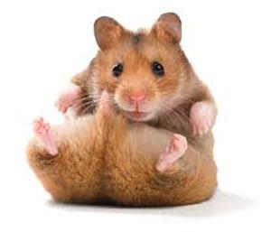 Livestock) Hamster 8-00