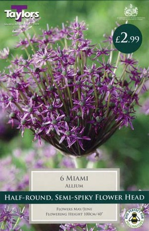 ALLIUM MIAMI