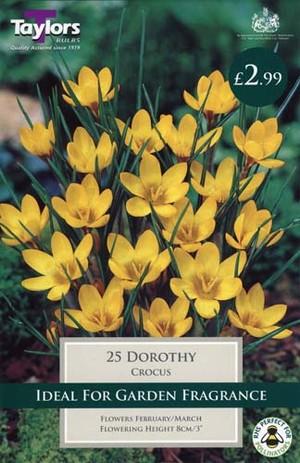 CROCUS DOROTHY