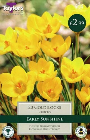 CROCUS GOLDILOCKS