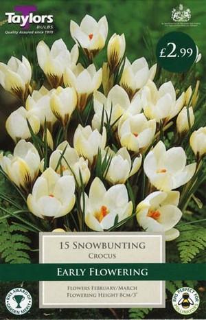 CROCUS SNOWBUNTING
