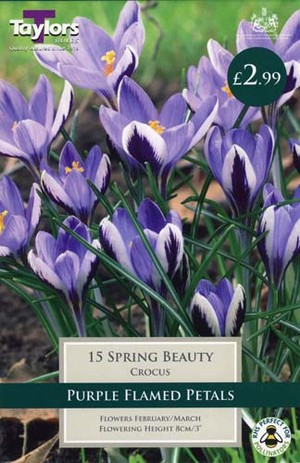 CROCUS SPRING BEAUTY