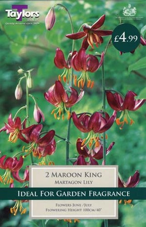 LILY MAROON KING