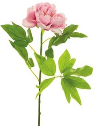 lotus-imports-ltd-silk-single-large-peony-dusty-pink-ref-166096.jpg