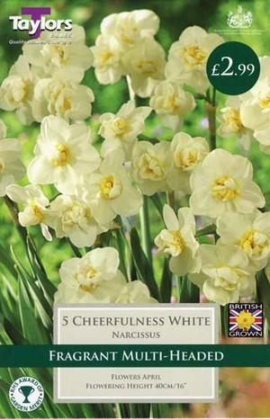NARCISSI CHEERFULNESS WHITE