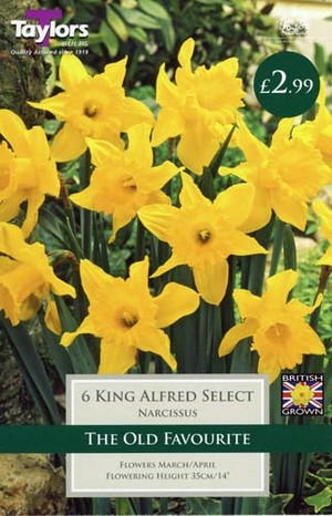 NARCISSI KING ALFRED SELECT