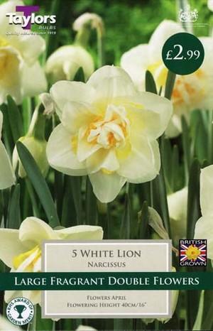 NARCISSI WHITE LION