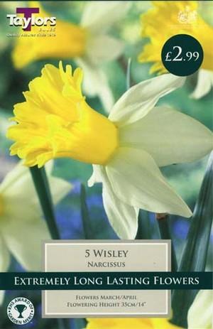 NARCISSI WISLEY