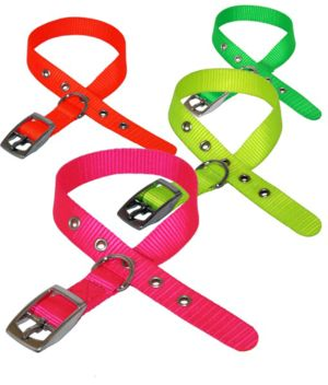 Nylon Buckled Collar 1-2 X 10-12 Asst Colours 0181