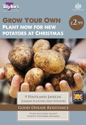 POTATO PENTLAND JAVELIN