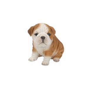 vivid-arts-buldog-puppy-pp-bdog-f.png